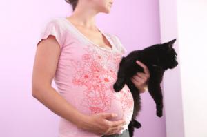Maladie chat femme enceinte
